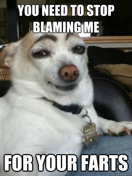 you need to stop blaming me for your farts - you need to stop blaming me for your farts  dog did it