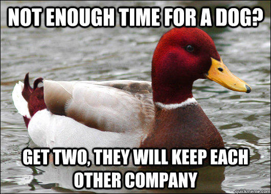 not enough time for a dog? get two, they will keep each other company - not enough time for a dog? get two, they will keep each other company  Malicious Advice Mallard