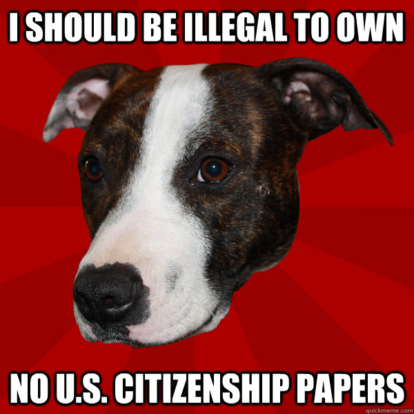 I SHOULD BE ILLEGAL TO OWN NO U.S. CITIZENSHIP papers  Vicious Pitbull Meme