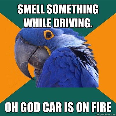 Smell something while driving. oh god car is on fire - Smell something while driving. oh god car is on fire  Paranoid Parrot