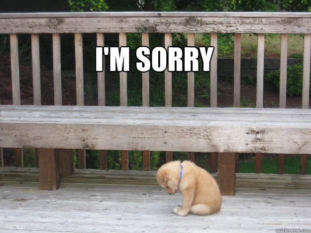I'm sorry  Sorry