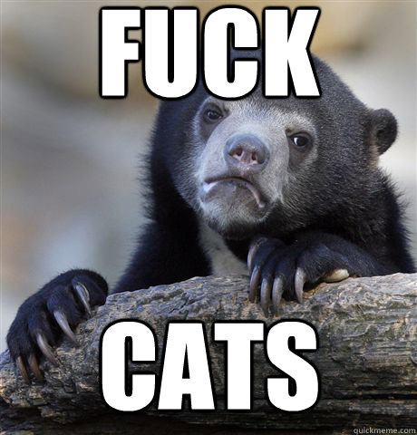 fuck Cats - fuck Cats  Confession Bear