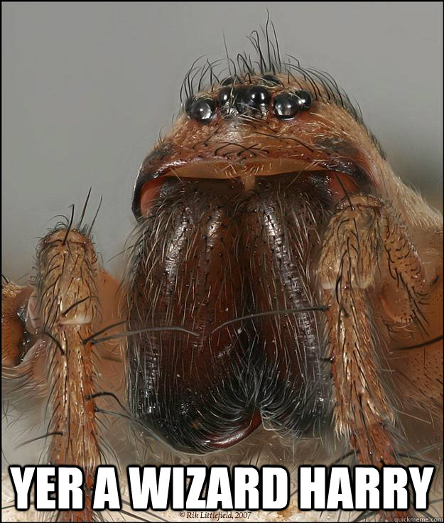 YER A WIZARD HARRY  Movie Quote Hobo Spider