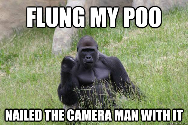 Flung my poo Nailed the camera man with it - Flung my poo Nailed the camera man with it  Misc
