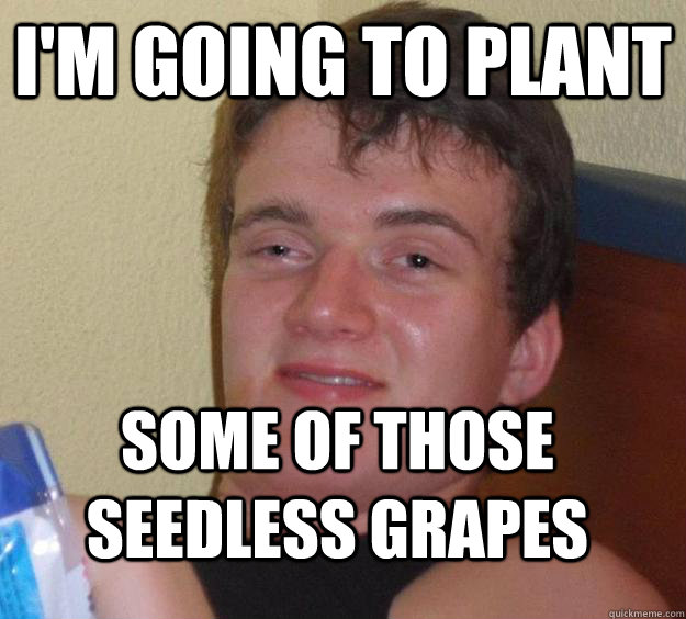 I'm going to plant some of those seedless grapes - I'm going to plant some of those seedless grapes  10 Guy