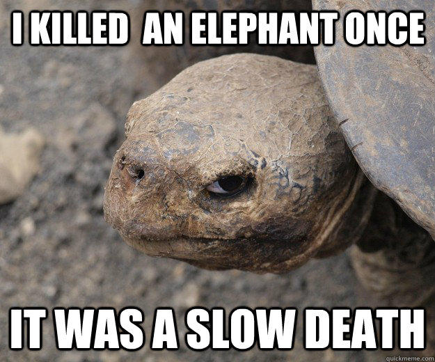 I killed  an elephant once It was a slow death  Angry Turtle