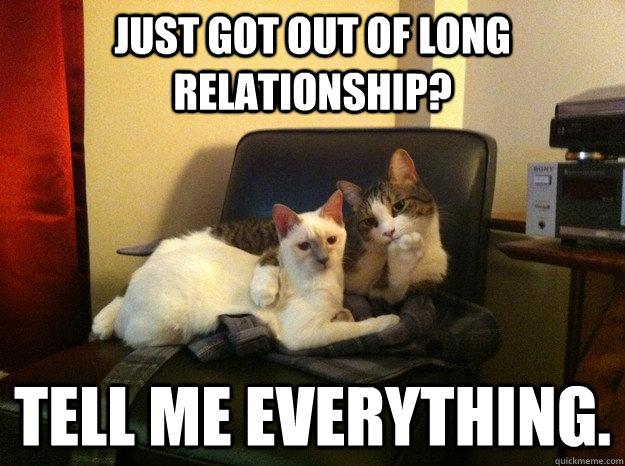 dead kitty meme relationship