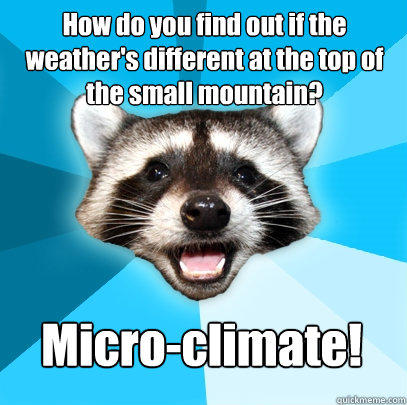 How do you find out if the weather's different at the top of the small mountain? Micro-climate! - How do you find out if the weather's different at the top of the small mountain? Micro-climate!  Lame Pun Coon