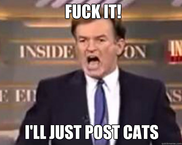 FUCK IT! I'll just post cats - FUCK IT! I'll just post cats  fuck it bill