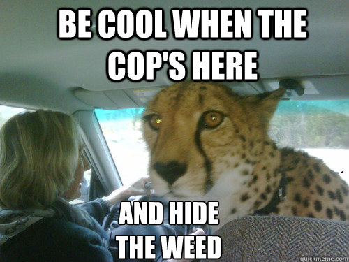 Be cool when the cop's here And hide the weed - Be cool when the cop's here And hide the weed  Chill Cheetah