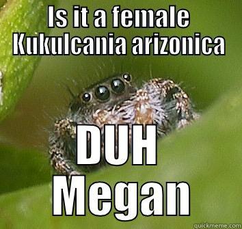 IS IT A FEMALE KUKULCANIA ARIZONICA DUH  MEGAN Misunderstood Spider