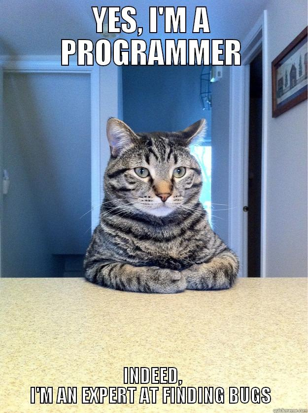 cat programmer quickmeme