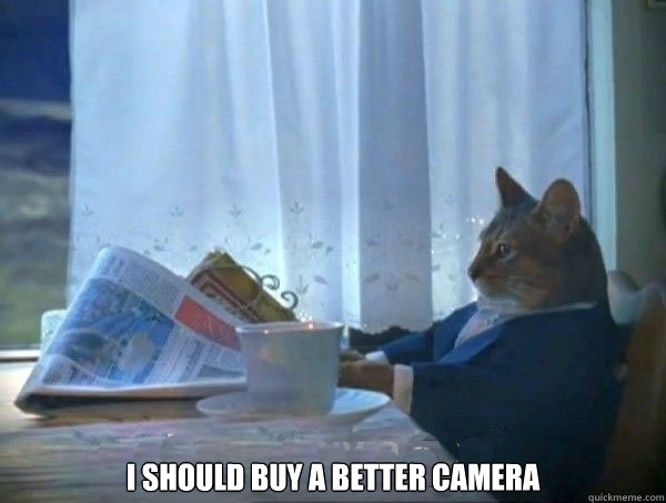I should buy a better camera -  I should buy a better camera  morning realization newspaper cat meme