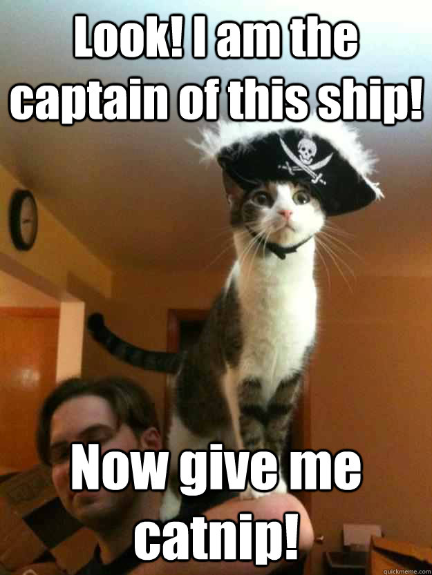Look! I am the captain of this ship! Now give me catnip!