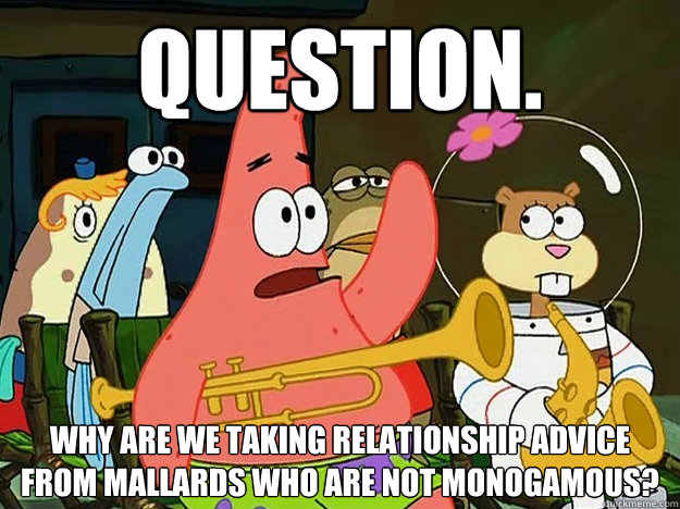 Question. Why are we taking relationship advice from mallards who are not monogamous?   - Question. Why are we taking relationship advice from mallards who are not monogamous?    Question Asking Patrick