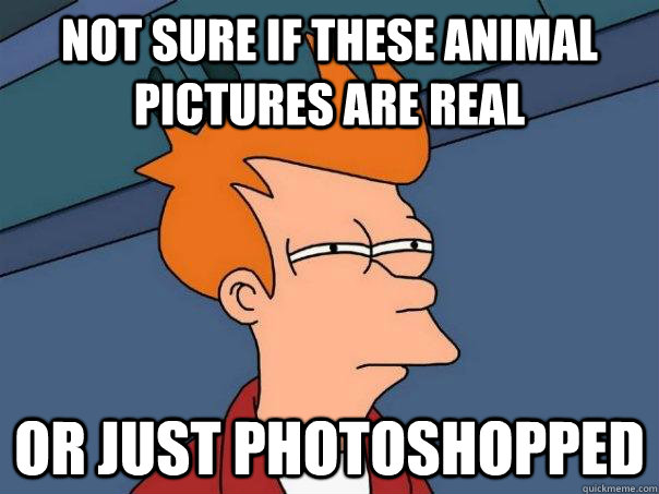 Not sure if these animal pictures are real or just photoshopped - Not sure if these animal pictures are real or just photoshopped  Futurama Fry
