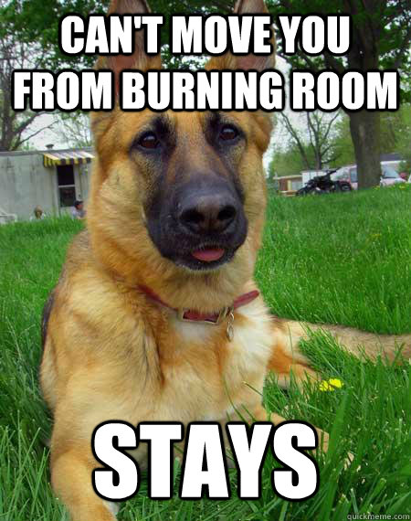 Can't move you from burning room stays - Can't move you from burning room stays  Best Friend Dog