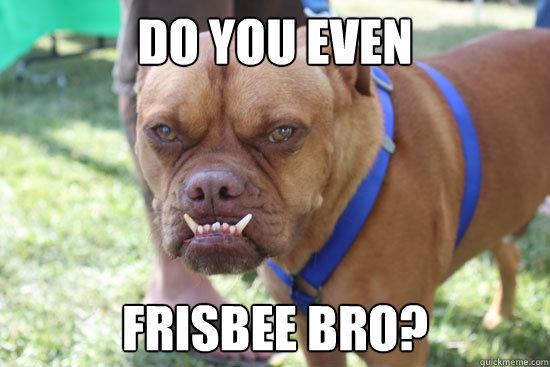 56241b22afedb71d1d244a5f42b7a456da973a86de3b691377099530952fcaa3 do you even frisbee bro? do you even dog quickmeme