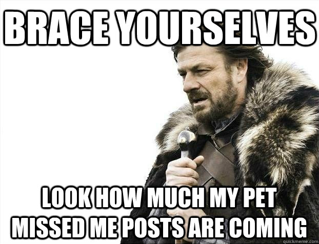 Brace yourselves Look how much my pet missed me posts are coming - Brace yourselves Look how much my pet missed me posts are coming  BRACEYOSELVES
