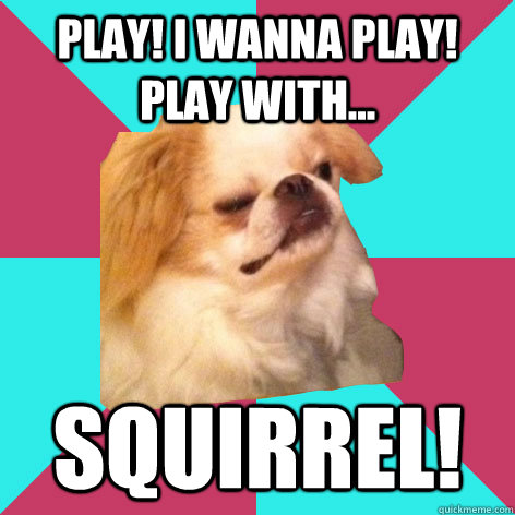 play! i wanna play! play with... squirrel!  - play! i wanna play! play with... squirrel!   Derp Dog