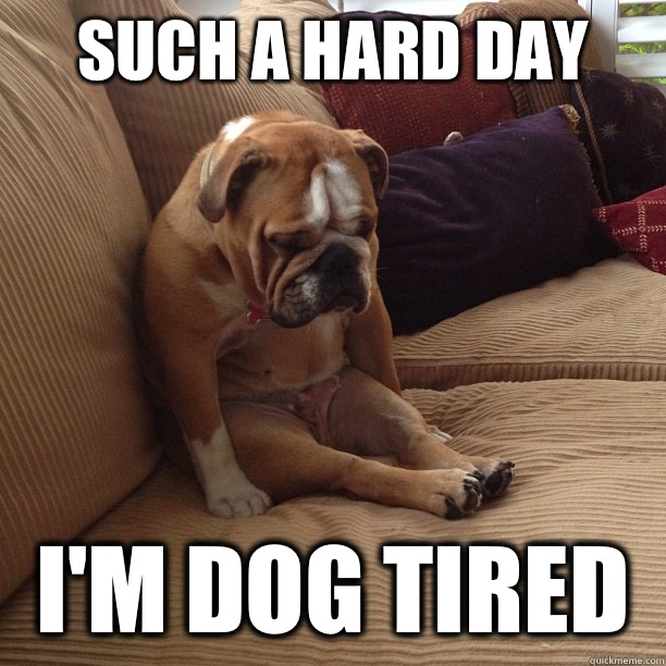 Such a hard day I'm dog tired  depressed dog