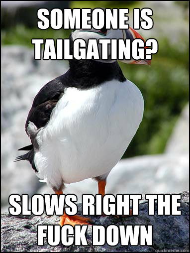 Someone is tailgating? slows right the fuck down - Someone is tailgating? slows right the fuck down  Passive-aggressive puffin
