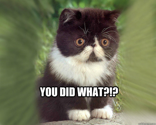YOu did what?!?   Surprised Cat Meme