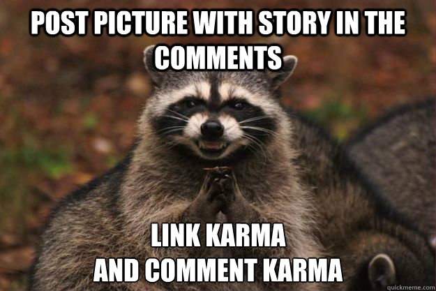 Post Picture with story in the comments Link Karma And comment karma - Post Picture with story in the comments Link Karma And comment karma  Evil Plotting Raccoon