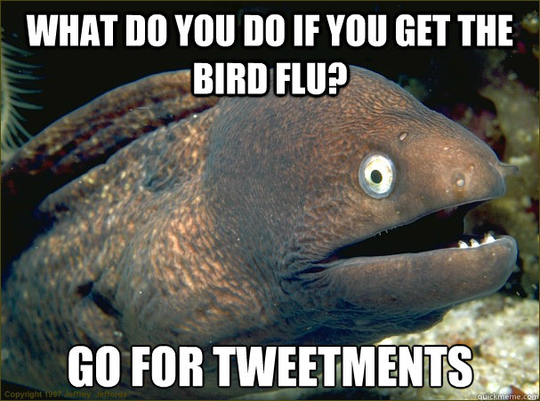 What do you do if you get the bird flu? Go for Tweetments - What do you do if you get the bird flu? Go for Tweetments  Bad Joke Eel