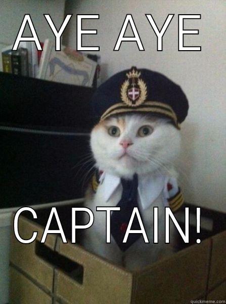 AYE AYE CAPTAIN! Captain kitteh