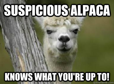 suspicious alpaca knows what you're up to!  Suspicious Alpaca