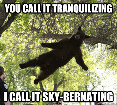 you call it tranquilizing i call it sky-bernating  falling bear
