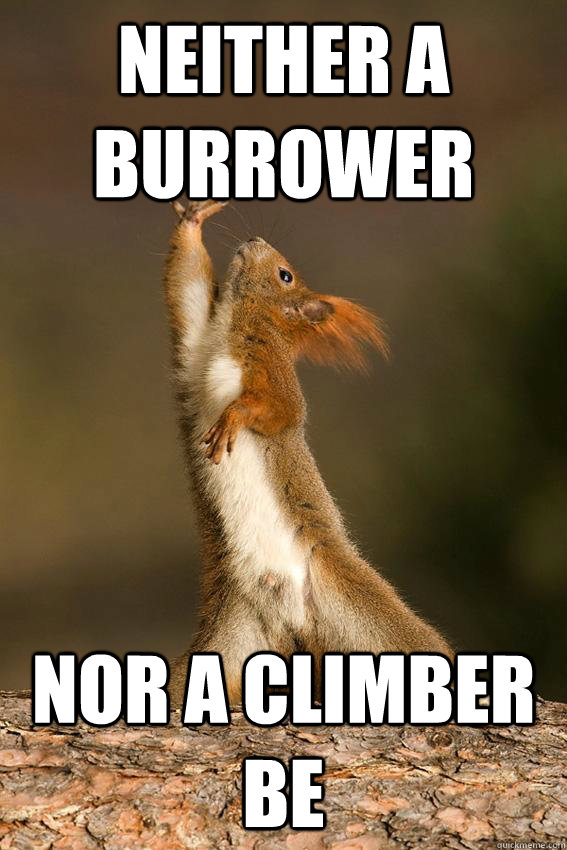 Neither a burrower Nor a climber be - Neither a burrower Nor a climber be  Shakespeare Squirrel