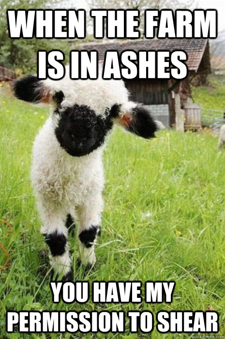 When the farm is in ashes  you have my permission to shear - When the farm is in ashes  you have my permission to shear  baby bane sheep