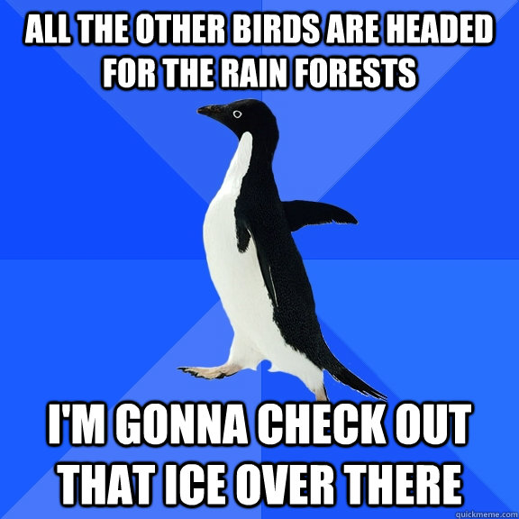 all the other birds are headed for the rain forests i'm gonna check out that ice over there - all the other birds are headed for the rain forests i'm gonna check out that ice over there  Socially Awkward Penguin