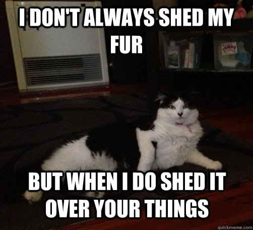 i don't always shed my fur but when i do shed it over your things