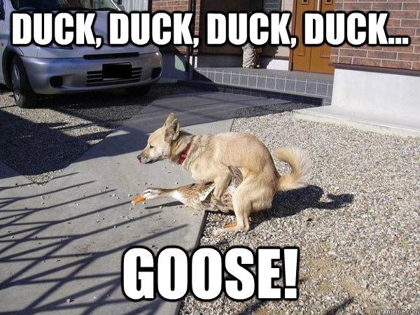 duck, duck, duck, duck... goose!