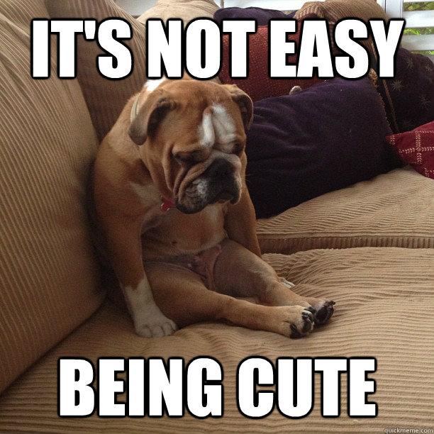 It's not easy Being cute   depressed dog