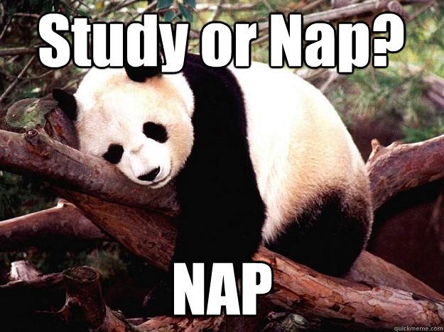 Study or Nap? NAP  Procrastination Panda
