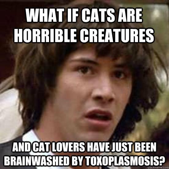 58341f492dfbf6ee6f66b7b99635f1caf498116ac2cb204a7622dbf568ec3d78 conspiracy keanu memes quickmeme,Cat Lover Meme