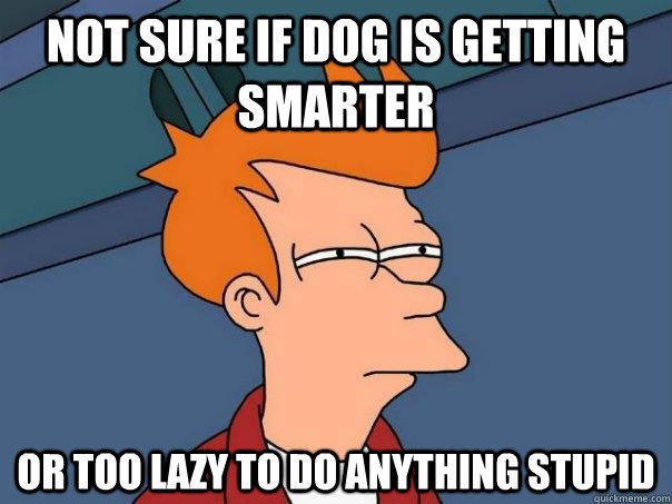 Not sure if dog is getting smarter Or too lazy to do anything stupid - Not sure if dog is getting smarter Or too lazy to do anything stupid  Futurama Fry