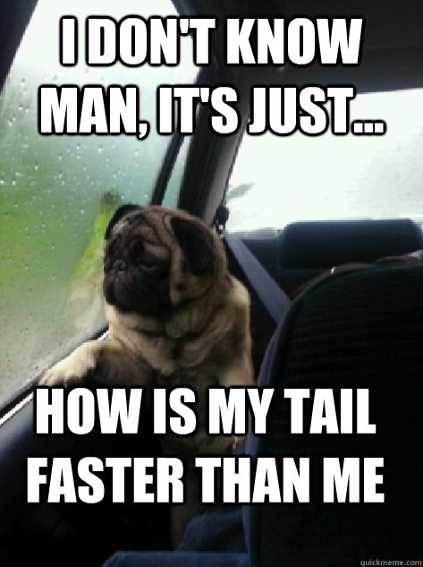 I don't know man, It's just... How is my tail faster than me - I don't know man, It's just... How is my tail faster than me  Introspective Pug