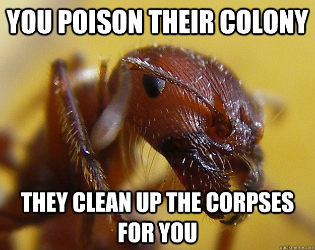 You poison their colony They clean up the corpses for you - You poison their colony They clean up the corpses for you  Good Guy Ants