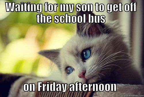 WAITING FOR MY SON TO GET OFF THE SCHOOL BUS             ON FRIDAY AFTERNOON             First World Cat Problems