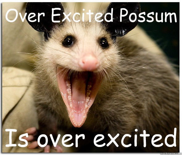 Over Excited Possum Is Over Excited Over Excited Possum Quickmeme