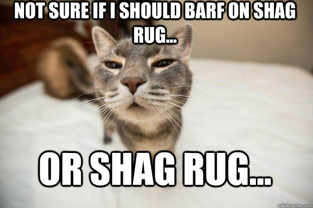 not sure if I should barf on shag rug...  or shag rug...