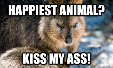 Happiest animal? Kiss my aSS! - Happiest animal? Kiss my aSS!  Unhappy Kuokka