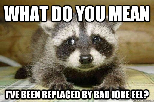 What do you mean i've been replaced by bad joke eel? - What do you mean i've been replaced by bad joke eel?  Sad ExLame Pun Raccoon