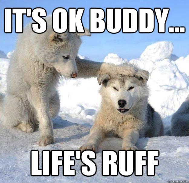 It's ok buddy... life's ruff - It's ok buddy... life's ruff  Caring Husky