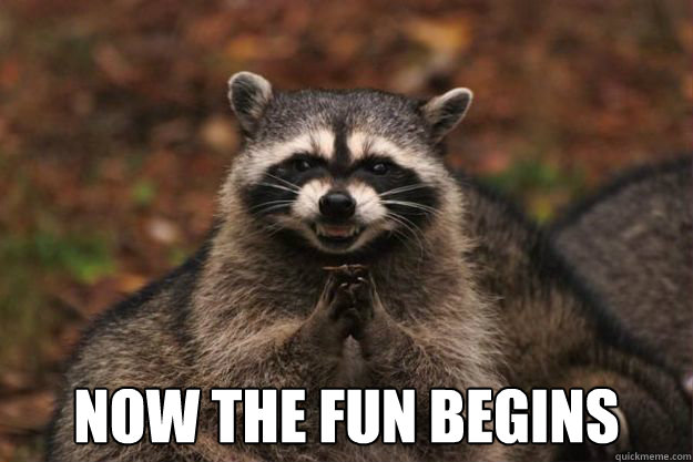 Now the fun begins -  Now the fun begins  Evil Plotting Raccoon